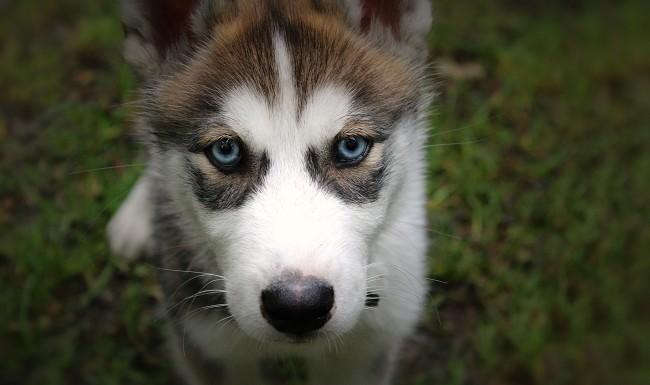 Welpentraining Berlin - Hundeschule für Welpen