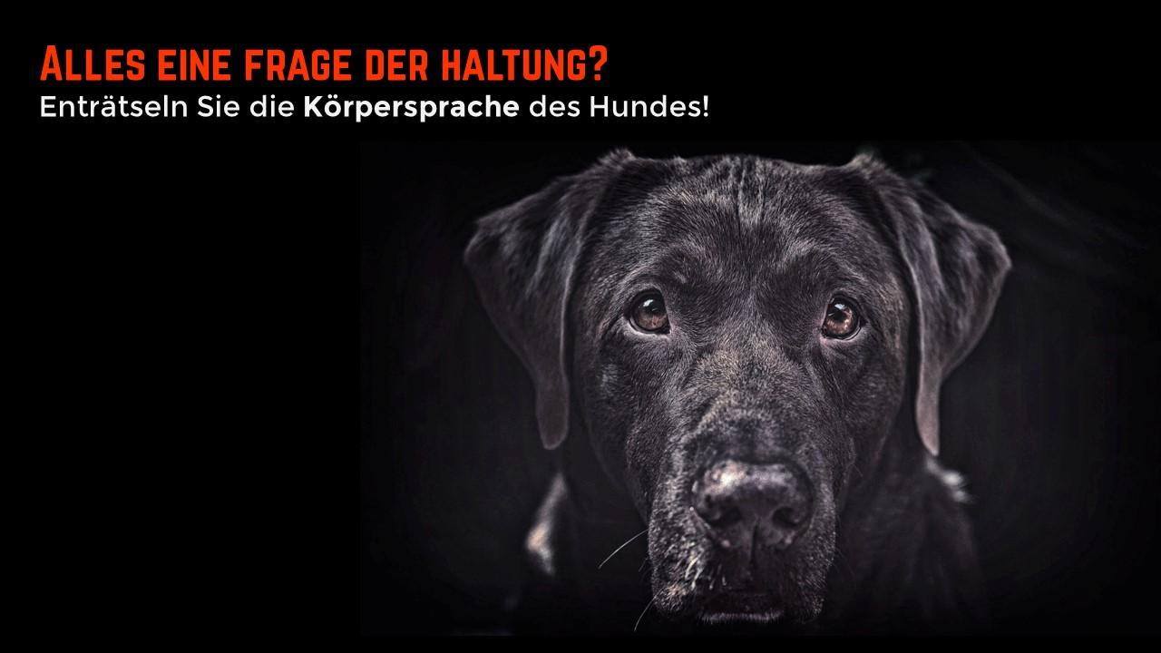 Körpersprache Des Hundes Arbeitsblatt : Hundestunde berlin